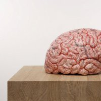 "Jan Fabre ""The Rhythm of the Brain"""